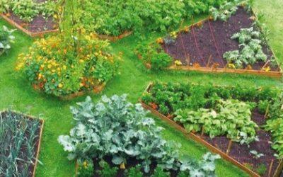 Capacitación para vecinos: Llega un Curso de Diseño en Permacultura a Barrio Verde las Moras!